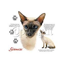 Siamese Cat Custom Nightshirt