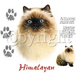 Himalayan Cat Custom Nightshirt