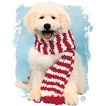 Dog With Scarf Custom Nightshirt