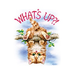 What's Up? Kitten Custom Night Shirt